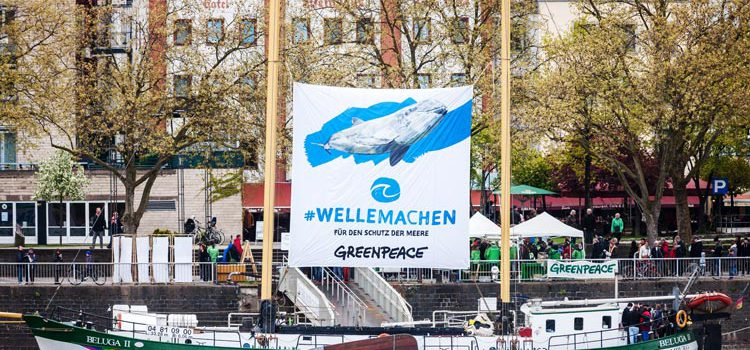 greenpeace-beluga